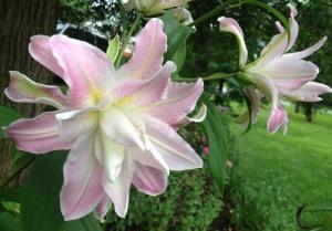 feminine flower