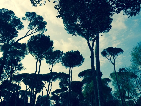 My favorite thing to do in Rome. Walking through the Borghese Park to get to the Gallery.